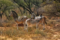 Bonnievale-Safaris-10