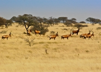 Bonnievale-Safaris-12